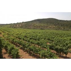Puesta de sol en los viñedos